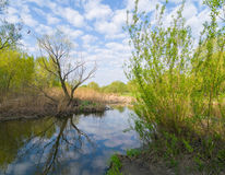 Spring waterscape Royalty Free Stock Images