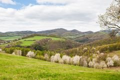 Landscape with blooming plum trees Stock Photography