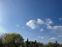 Spring weather, sunny sky, flowering trees in the village.
