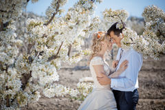 Spring wedding Royalty Free Stock Photo