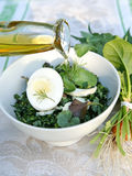 Spring weed salad dressed with olive oil. Healthy enrich salad with spring native-grasses weed and vegetable plants - sorrel, clover, nettle, glague, lady's royalty free stock photos