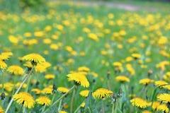 Spring_weide jpg Royalty-vrije Stock Afbeeldingen