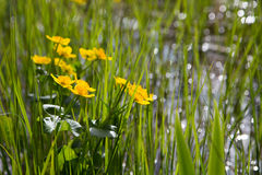 Spring is wet Stock Images
