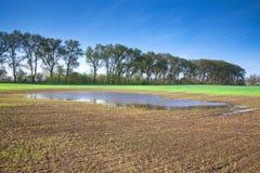 Spring wheat field Stock Photos