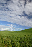 Spring Wheat On Rolling Hills Stock Photography