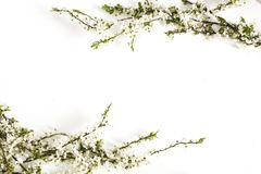 Spring blossoms on white. Floral border stock photography