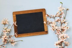 Spring white cherry blossoms tree and blackboard Royalty Free Stock Image