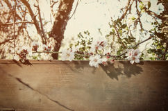 spring white cherry blossoms tree and old wooden sign Royalty Free Stock Image