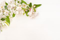 Spring White Crabapple Blossoms limb against White Board Wall Background with room or space for copy, text or your words.  Horizon stock photo