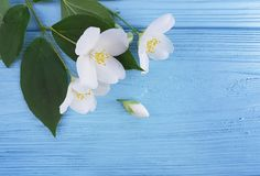 Spring white flowers arrangement on a blue wooden background. Spring white flowers a blue wooden background arrangement Stock Photography