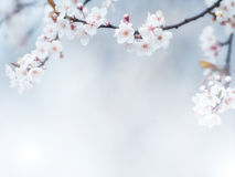 Flowers. Spring white flowers background with good light Royalty Free Stock Photo