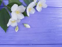 Spring white flowers on a blue wooden background. Spring white flowers a blue wooden background Royalty Free Stock Images