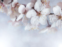 Flowers. Spring white flowers with good hight Royalty Free Stock Photography