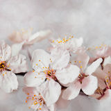 Flowers. Spring white flowers with good light Royalty Free Stock Image
