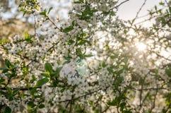 Spring white flowers on the tree. Spring white flowers on tree Royalty Free Stock Photos