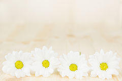 Spring white flowers on a wooden background. Copy space. Background. Pattern. Stock Images