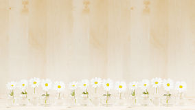 Spring white flowers on a wooden background. Copy space. Background. Pattern. Stock Photo