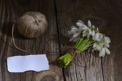 Spring white snowdrop flowers on wooden background. Stock Photo