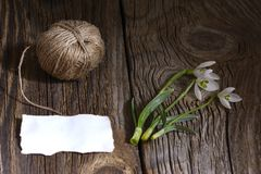 Spring white snowdrop flowers on wooden background. Royalty Free Stock Image