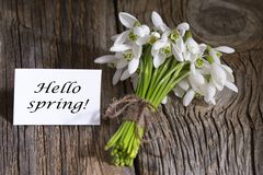 Spring white snowdrop flowers on wooden background. Royalty Free Stock Images
