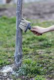Spring whitewashing of trees. Protection from sun and pests. Ukraine Royalty Free Stock Photos