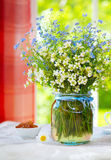 Spring wild flowers  bouquet . Royalty Free Stock Photos