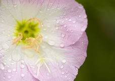 Spring Wild Flowers with Rain Drops Stock Image