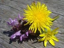 Spring wild flowers on wooden batten. Lesser celandine, dandelion and purple deadnettle on wooden board in the sunlight stock photography