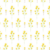 Spring wild yellow flower field seamless pattern. Floral tender fine summer vector pattern on white background. For fabric textile prints and apparel Stock Images