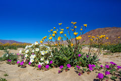 Spring Wildflower Bouquet. Bouquet of Desert Wildflowers With Mountains and Blue Sky in Background Stock Photo