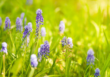 Spring wildflowers. Beautiful spring wildflowers in sunlight royalty free stock photos