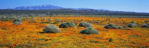 Spring wildflowers Stock Photos