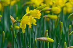 Spring wildflowers Royalty Free Stock Photo