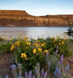 Spring Wildflowers Banks Lake Devil`s Punch Bowl Eastern Washington. High ridge at sunset next to the campground at Banks Lake Washington royalty free stock images