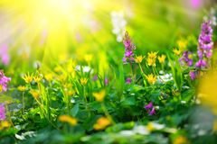 Spring wildflowers. Meadow field with wild flowers Stock Image