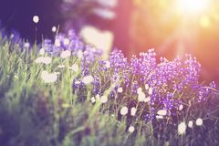 Spring Wildflowers Scenery Royalty Free Stock Photo