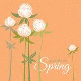 Spring wildflowers Stock Photo