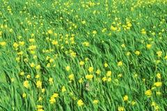 Spring wildflowers in wind, Ojai, CA Royalty Free Stock Photos