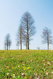 Spring will come. bald trees and little Stock Image