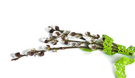 Spring willow branch on a white background. Bounded Stock Images