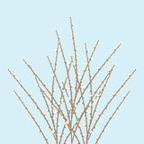 Spring Willow Twig Royalty Free Stock Image
