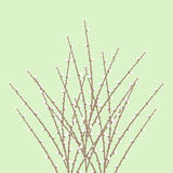 Spring Willow Twig Stock Photos