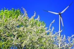 Free Spring Wind Stock Photo - 12464850