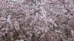 Spring Wind stock footage