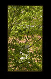 Spring Window. Spring, green leaves outside window stock photos