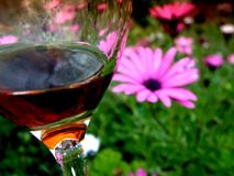 Galss of red wine in Spring garden. View of a spring garden with pink daisies through a glass of red wine Royalty Free Stock Image