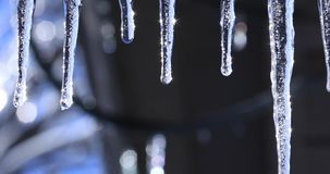 Spring or winter landscape with crystal icicles and falling shiny drops. Video with icicle on beautiful bright background. stock footage