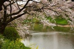 Spring wonderland in Tokyo Stock Photo