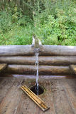 Spring in the wood. Water flows on a wooden trench Stock Photography