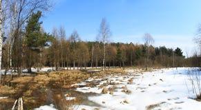 Free Spring Wood Stock Image - 8934201